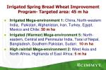 irrigated spring bread wheat improvement program targeted area 45 m ha
