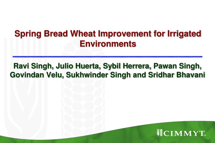 spring bread wheat improvement for irrigated environments n.