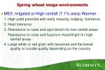 spring wheat mega environments2