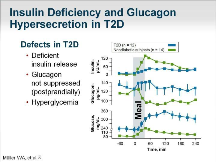 Insulin Deficiency and Glucagon Hypersecretion in T2D