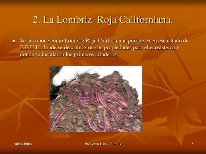 2. La Lombriz  Roja Californiana.