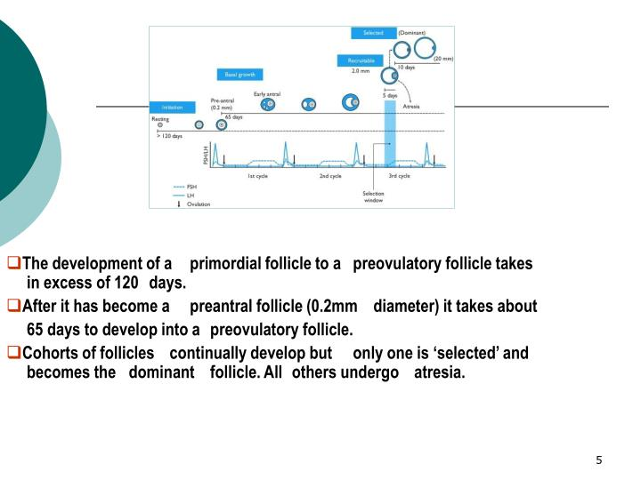 The development of a primordial follicle to a preovulatory follicle takes in excess of 120 days.
