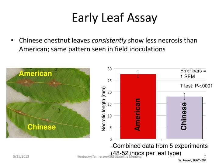 Early Leaf Assay