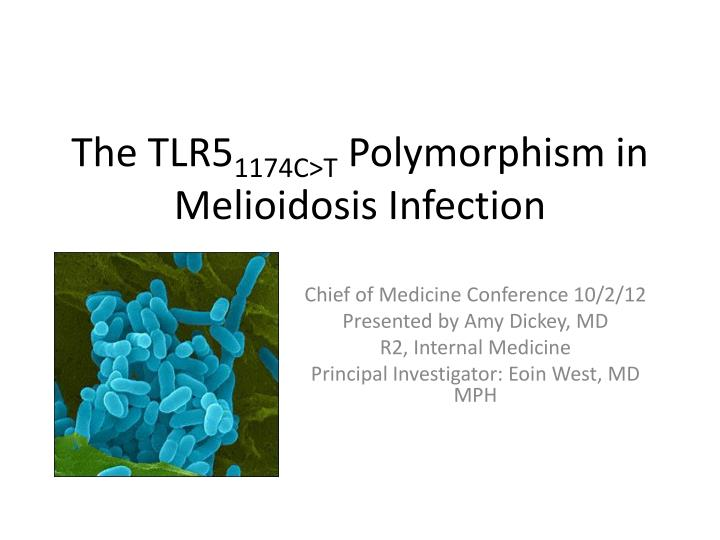 The tlr5 1174c t polymorphism in melioidosis infection
