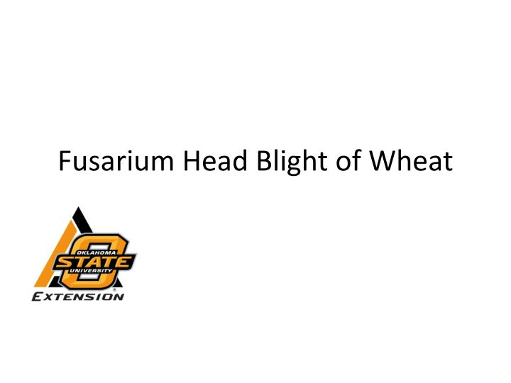 fusarium head blight of wheat n.