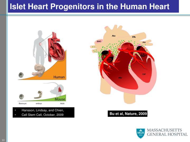Islet Heart Progenitors in the Human Heart