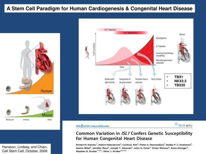 A Stem Cell Paradigm for Human Cardiogenesis & Congenital Heart Disease