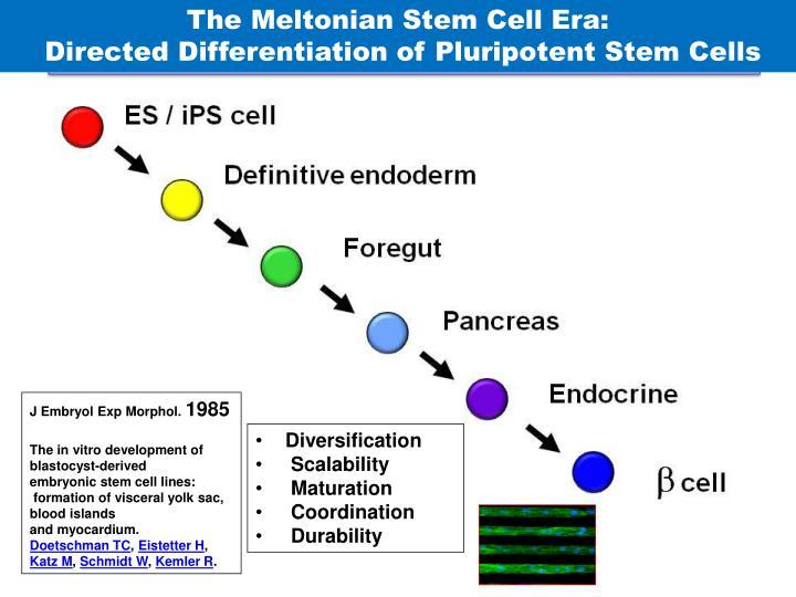 The Meltonian Stem Cell Era: