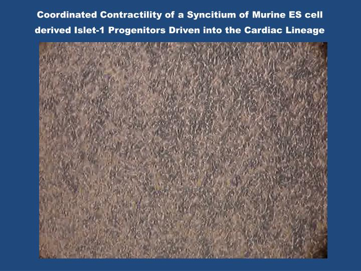 Coordinated Contractility of a Syncitium of Murine ES cell