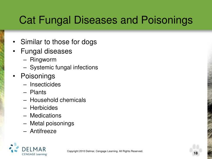 Cat Fungal Diseases and Poisonings