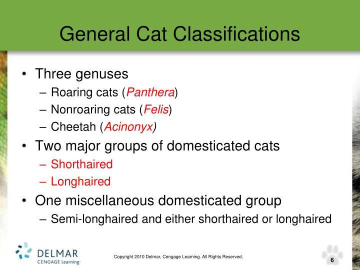 General Cat Classifications