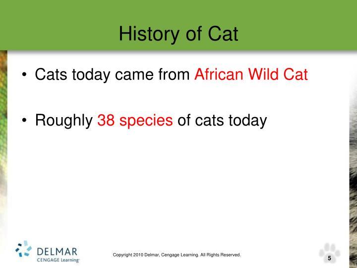 History of Cat
