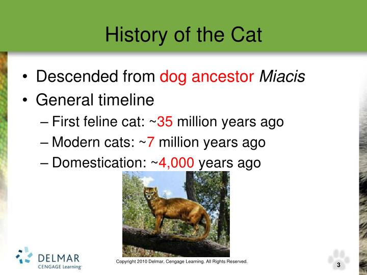 History of the cat