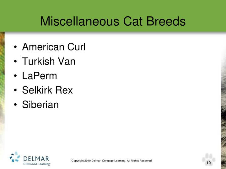 Miscellaneous Cat Breeds