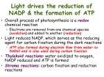 light drives the reduction of nadp the formation of atp