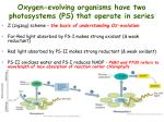 oxygen evolving organisms have two photosystems ps that operate in series