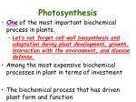 photosynthesis1