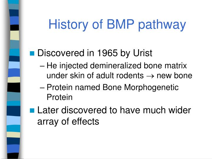 History of BMP pathway