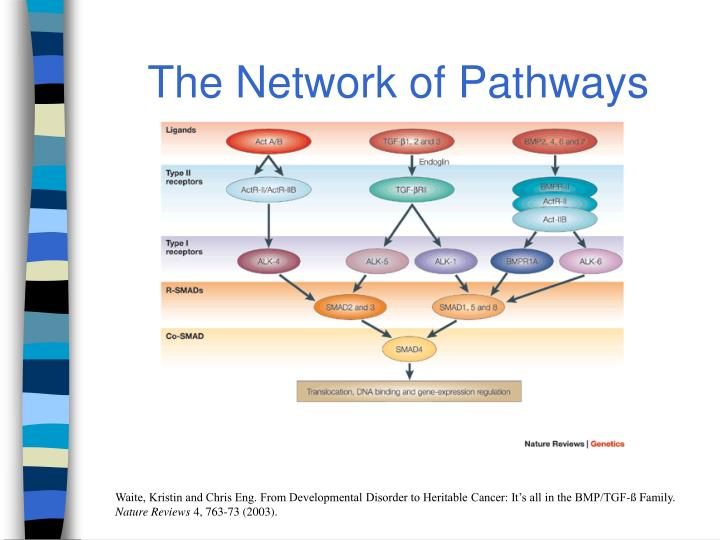 The Network of Pathways