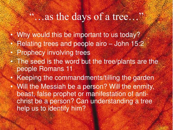 as the days of a tree n.