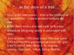 as the days of a tree1