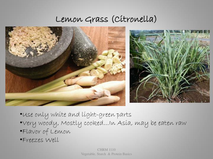 Lemon Grass (Citronella)
