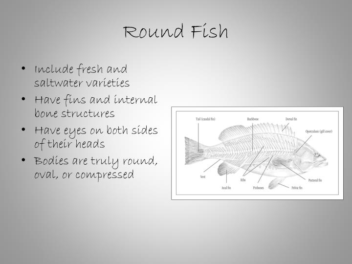 Include fresh and saltwater varieties