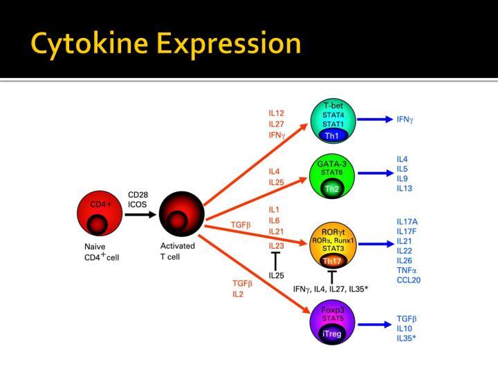 Cytokine Expression