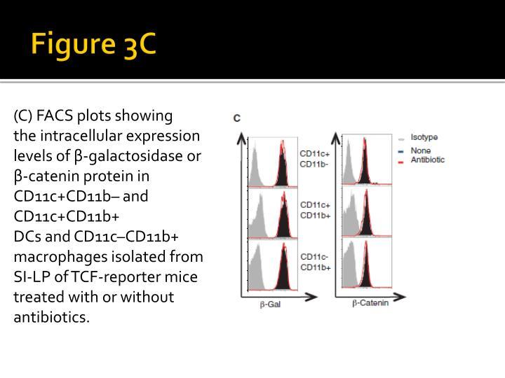 Figure 3C