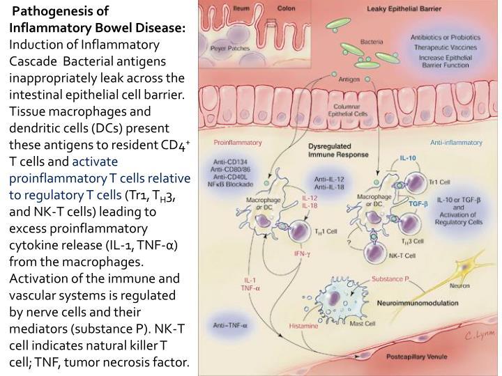 Pathogenesis of Inflammatory Bowel Disease: