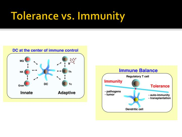 Tolerance vs immunity
