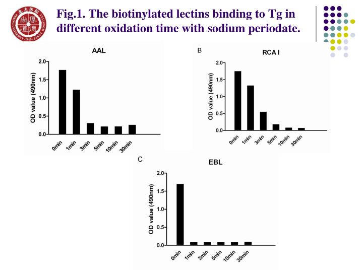 Fig.1. The biotinylated lectins binding to Tg in different oxidation time with sodium periodate.