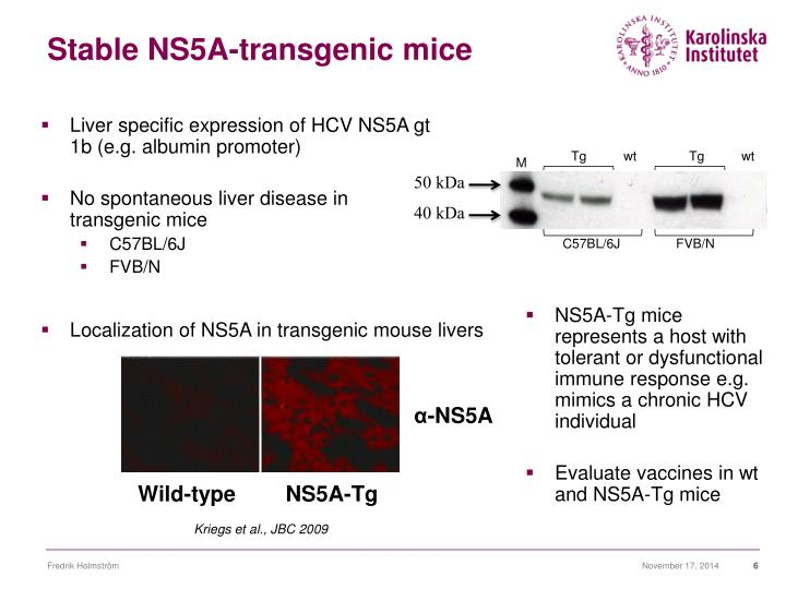 Stable NS5A-transgenic mice