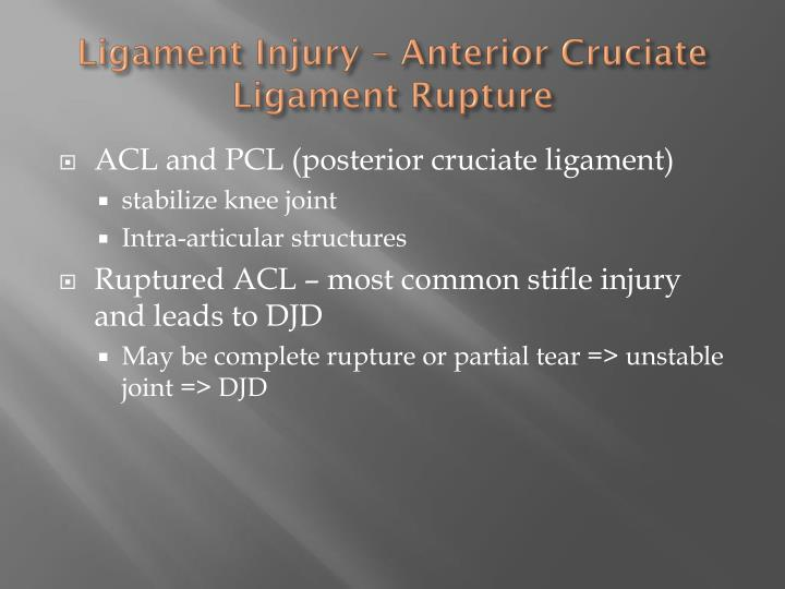 Ligament injury anterior cruciate ligament rupture