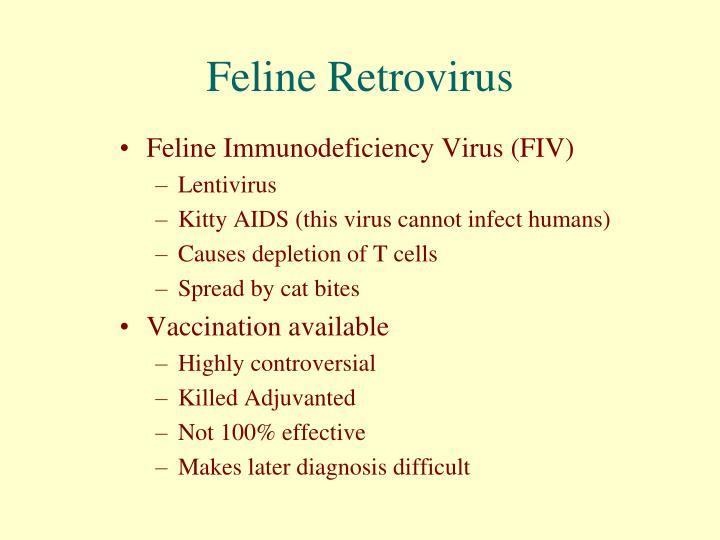 Feline Retrovirus