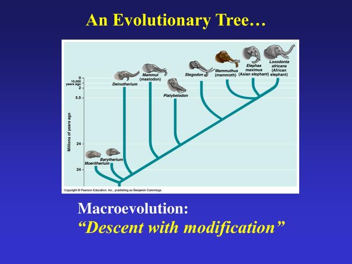 An evolutionary tree