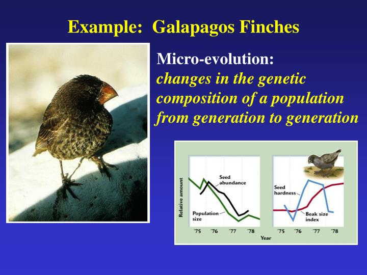 Example:  Galapagos Finches
