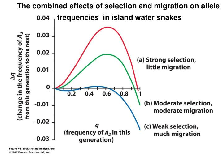 The combined effects of selection and migration on allele