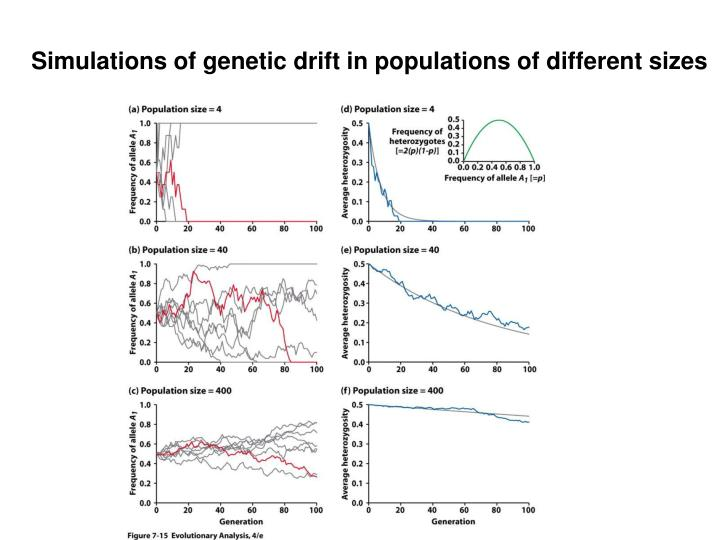 Simulations of genetic drift in populations of different sizes