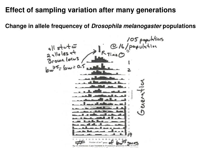 Effect of sampling variation after many generations