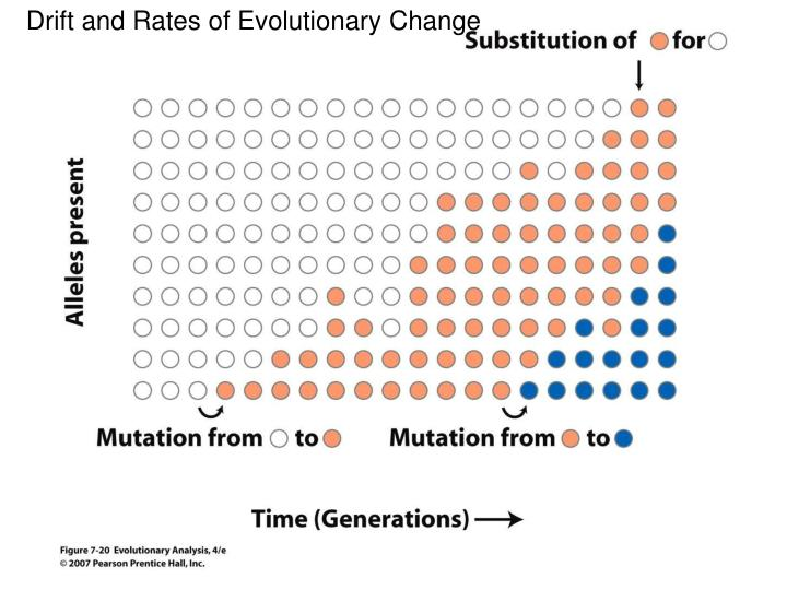 Drift and Rates of Evolutionary Change