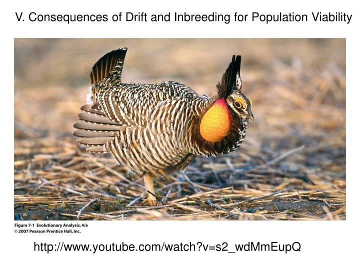 V. Consequences of Drift and Inbreeding for Population Viability