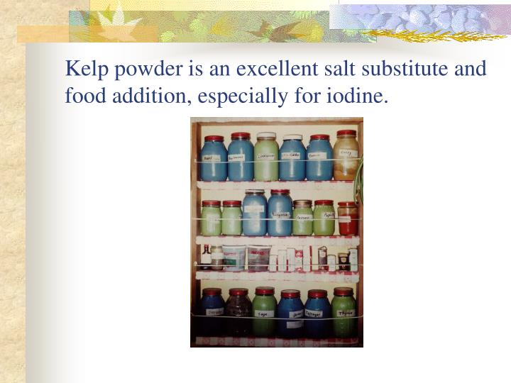 Kelp powder is an excellent salt substitute and food addition, especially for iodine.