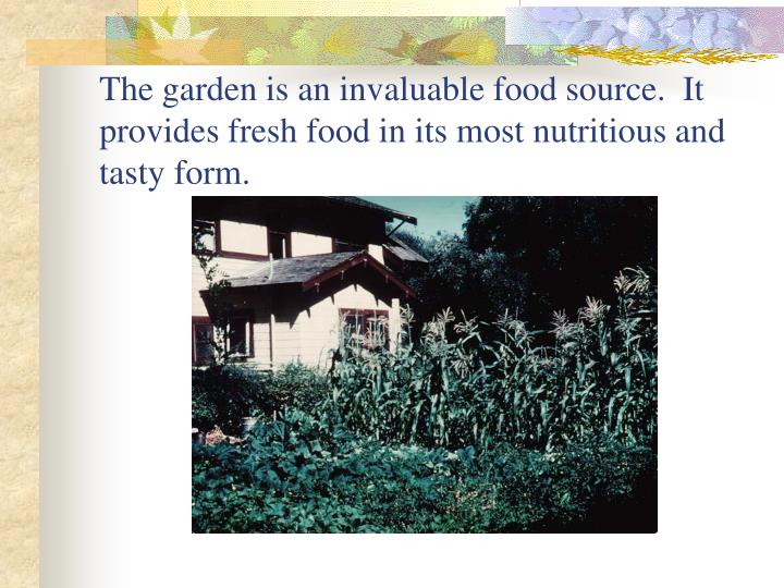 The garden is an invaluable food source.  It provides fresh food in its most nutritious and tasty form.