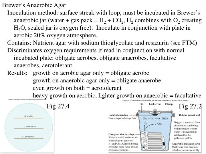Brewer's Anaerobic Agar
