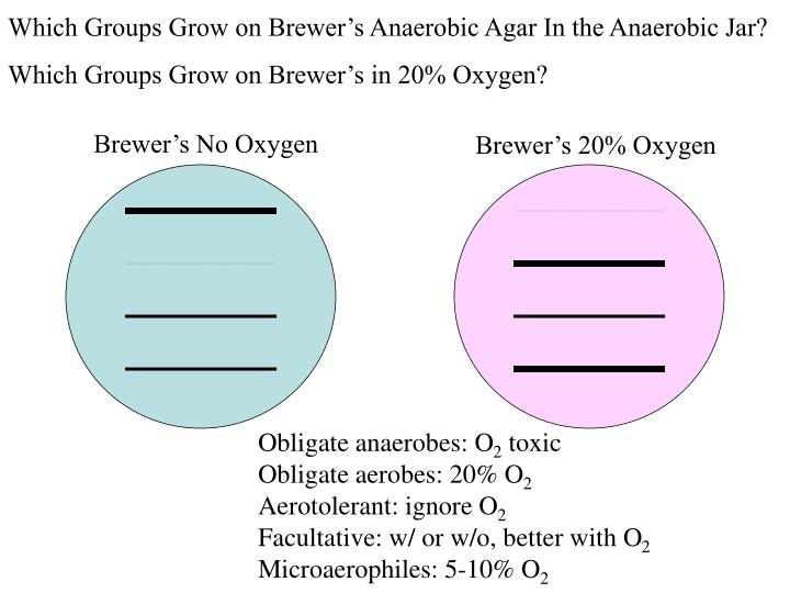 Which Groups Grow on Brewer's Anaerobic Agar In the Anaerobic Jar?