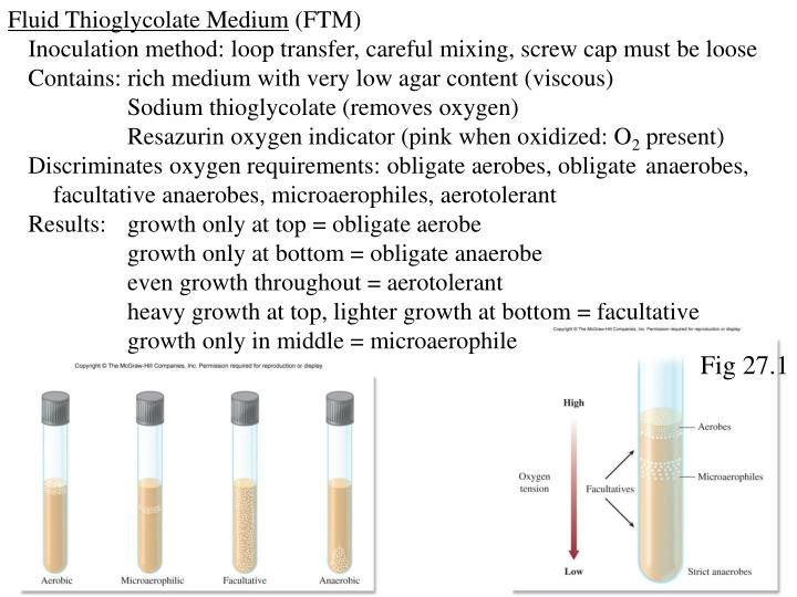 Fluid Thioglycolate Medium