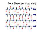 beta sheet antiparallel