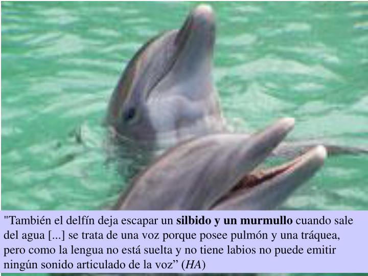 """""""También el delfín deja escapar un"""