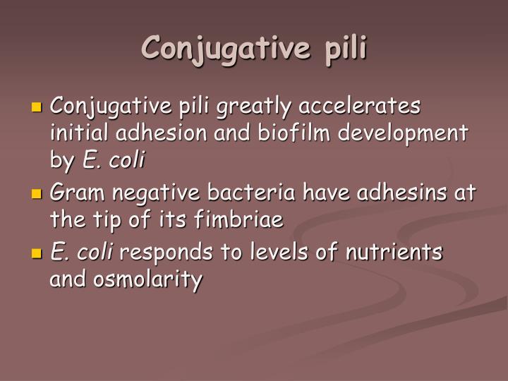 Conjugative pili